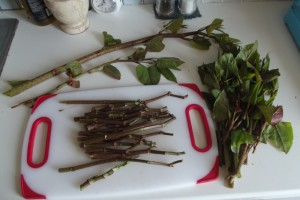 Japanese knotweed prepared for cooking.
