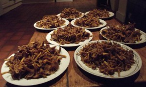 Winter chanterelles in abundance. These were picked on the first day I had a customer fail to turn up for a foraging session.  And it was at a location chosen by himself! Bad move.