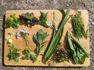 A selection of edible spring plants