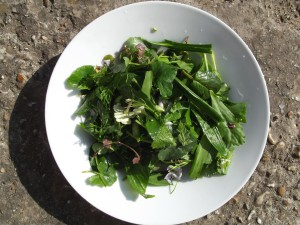 Foraged mixed spring salad, washed and chopped.