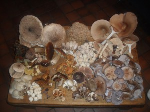 Late November 2011, as the mushroom season peaked.  Normally its earlier, but October 2011 was far too hot and dry for fungi.