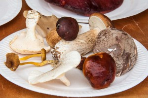 Clockwise from top left: Wood Hedgehog, Oyster Mushroom, Bay Bolete, Penny Bun, Blusher, Slippery Jack, Tiger Sawgill, Winter Chanterelle. (Copyright Julia Claxton)