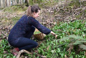 Picking Ramsons (Wild Garlic) 04/03/2017
