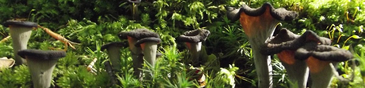 Geoff's Fungi & Foraging